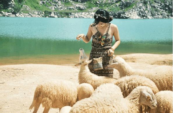 Chụp hình cũng cừu tại Hồ Đá Xanh Vũng Tàu