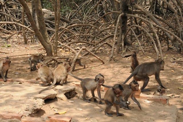 Kết quả hình ảnh cho dảo khỉ