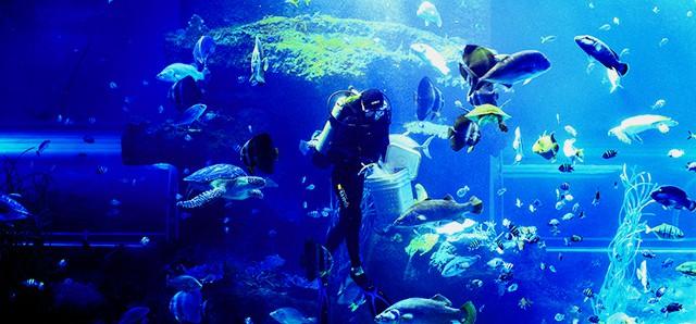 Kết quả hình ảnh cho viện hải dương học nha trang