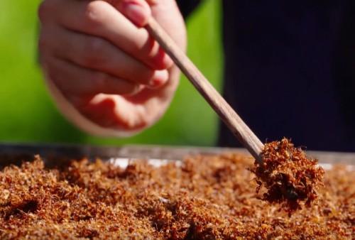 Muối kiến vàng GIa Lai