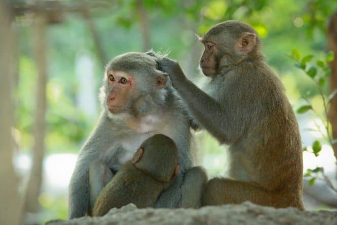 Những chú khỉ tinh nghịch trên đảo khỉ