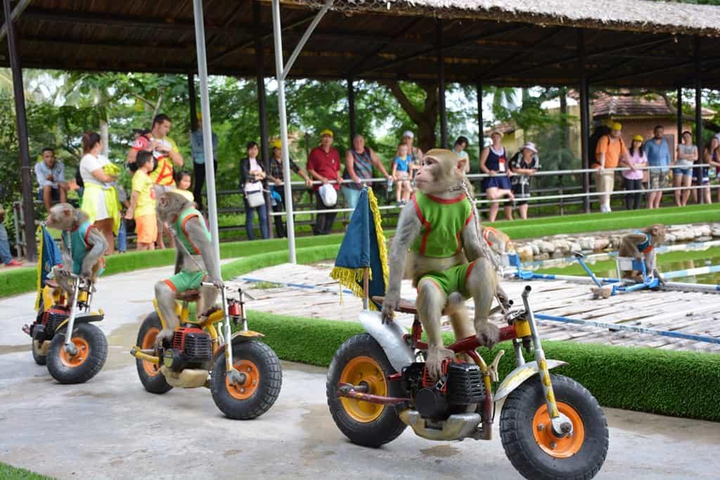 xiếc khỉ tại đảo khỉ