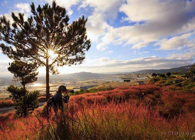 Đừng bỏ qua đồi cỏ hồng thành phố ngàn hoa cực đẹp tới nao lòng tháng 11 này