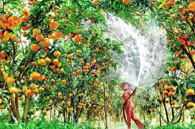 Du lịch những vườn trái cây ở Cần Thơ