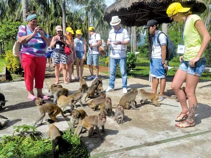 Trực tiếp vui chơi chụp hình với các chú khỉ trên đảo (Ảnh ST)