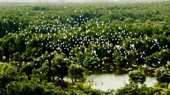 Vườn quốc gia Tràm Chim (Ảnh ST)