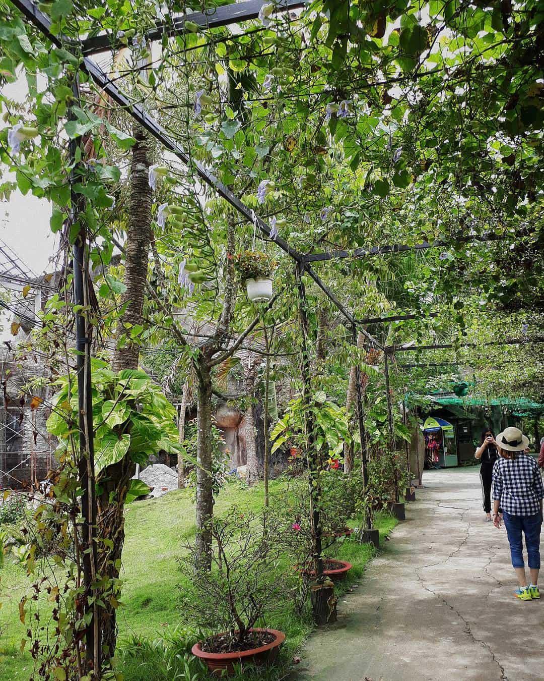 Con đường dẫn đến vựa trái cây