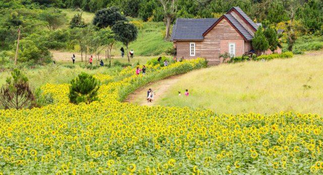 Địa điểm vui chơi Đà Lạt - Dalat Milk Farm