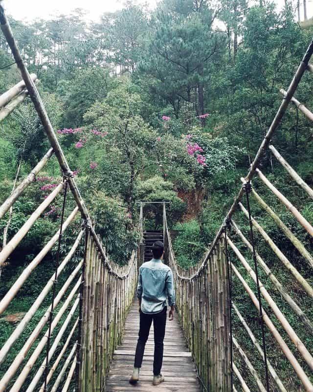 Địa điểm vui chơi Đà Lạt - Ma Rừng Lữ Quán