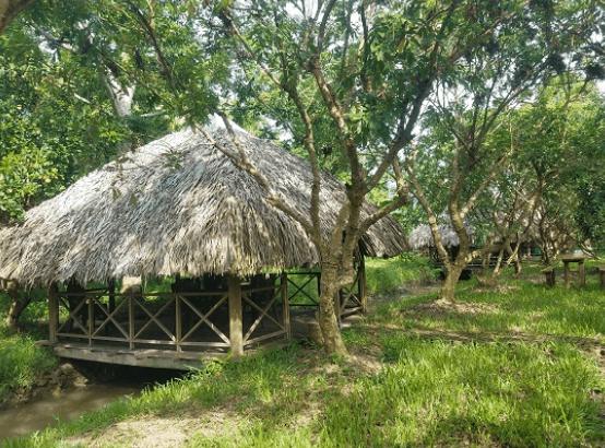 Vườn sinh thái Xẻo Nhum (Ảnh ST)