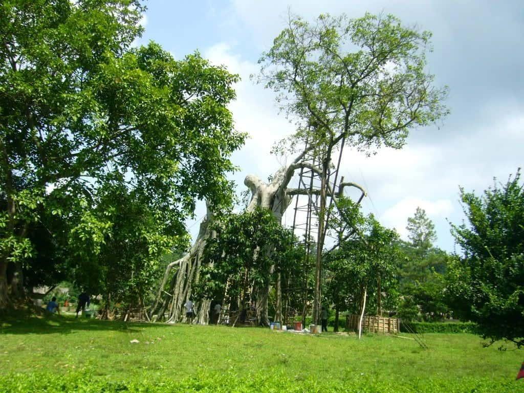 Khu di tích Tân Trào - cây đa Tân Trào