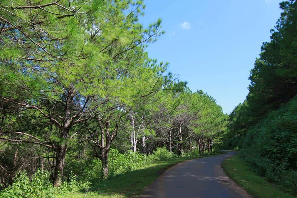 Vẻ đẹp của một đoạn đường nhỏ trên hành trình đến Biển Hồ Gia Lai. (Ảnh ST)