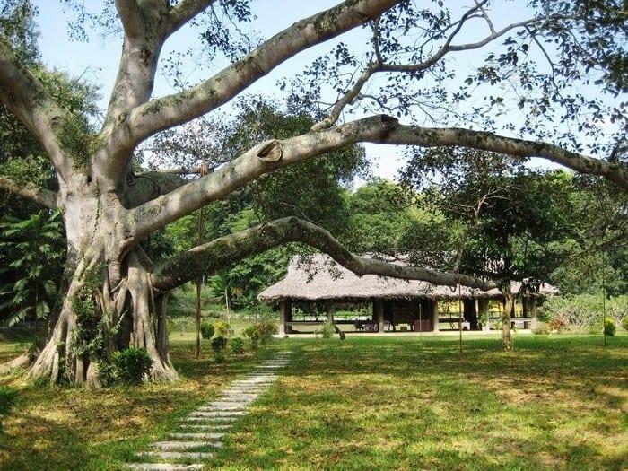 Khu di tích Tân Trào - đình Kim Trận