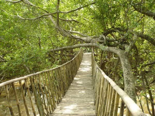 Những chiếc cầu treo rất độc đáo giữa rừng (Ảnh: ST)