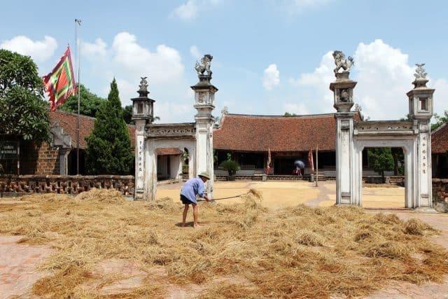 Làng Đường Lâm mùa lúa chín