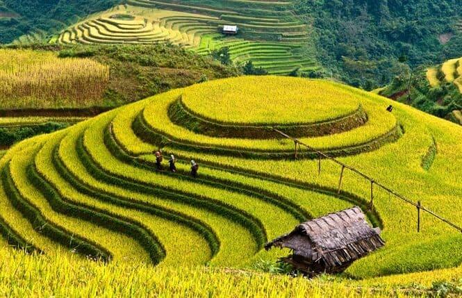 Ruong bac thang Tu Le o Mu Cang Chai