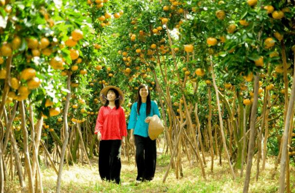 Dạo quanh vườn trái cây Lái Thiêu