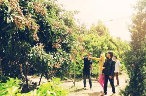 Tham quan vườn trái cây Lái Thiêu Bình Dương