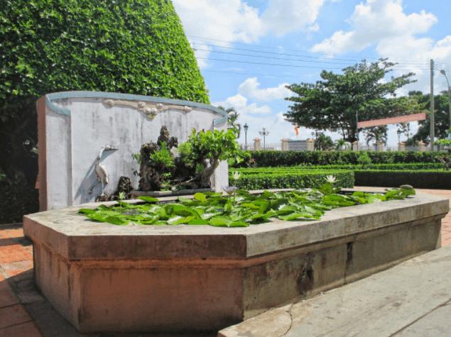 Hồ sen trước cửa phòng học