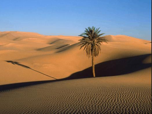 Vẻ đẹp hoang sơ của đồi cát