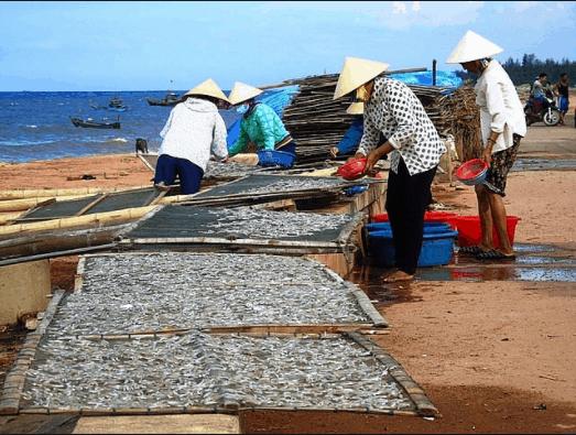 Hình ảnh người dân làng chài làm khô cá