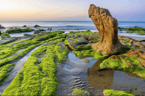 Rêu phủ kín những tảng đá ở bãi biển Cổ Thạch