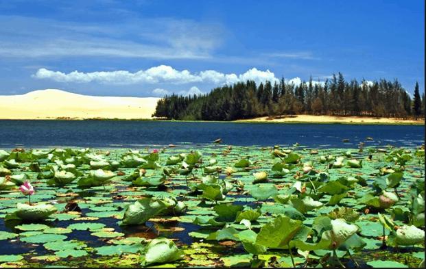 Sen phủ kín hồ