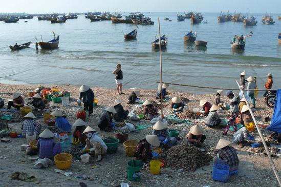 Người dân làng chài phân loại hải sản