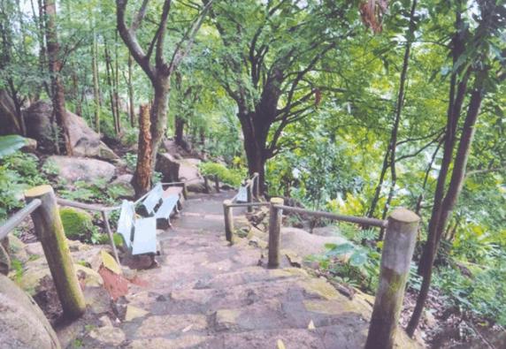 Đường lên đỉnh núi Chứa Chan theo đường chùa