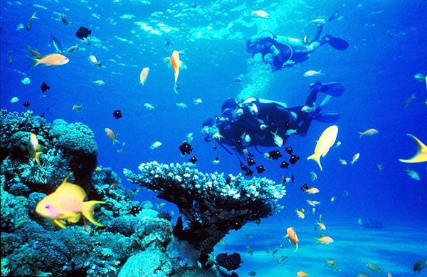 Lặn ngắm san hô quanh đảo (Ảnh ST)