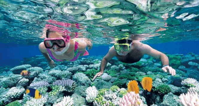 Ngắm san hô dưới biển Phú Quốc
