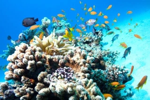 Du lịch Hòn Một lặn ngắm san hô (Ảnh ST)