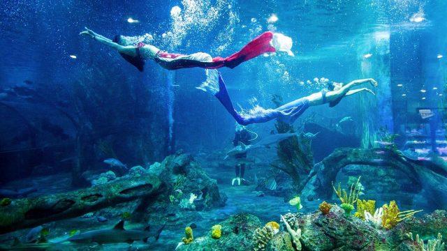 Các nàng tiên cá bơi trong thủy cung của Vinpearl Land (Ảnh ST)