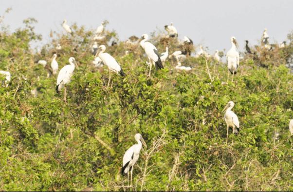 Hệ sinh thái đa dạng ở Long An