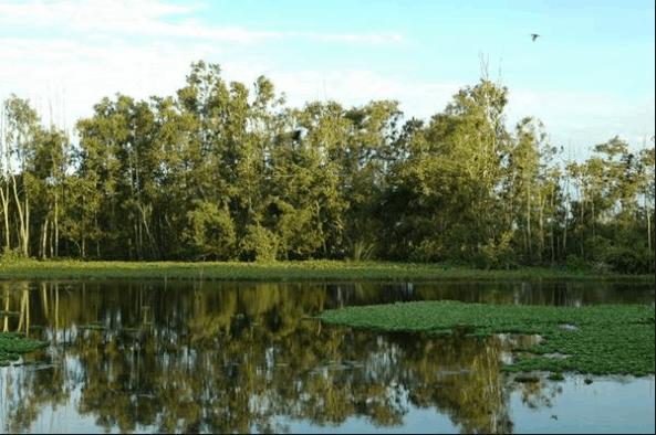 Không gian thiên nhiên xanh