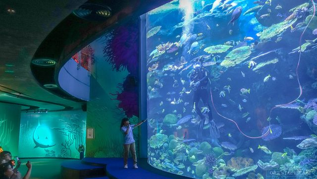 SEA LIFE Bangkok Ocean World (Ảnh ST)