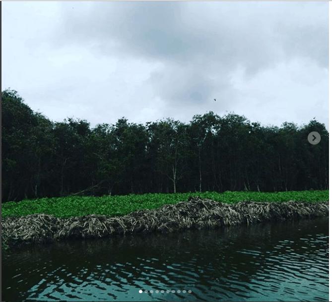 rừng tràm
