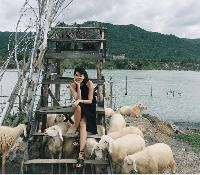 Tạo dáng một chút cùng đàn cừu