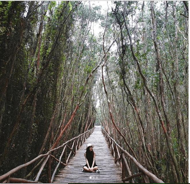 rừng tràm nguyên sinh