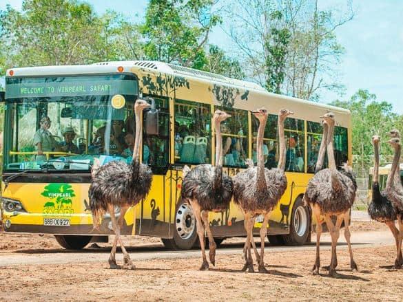 Khu vườn Safari Phú Quốc