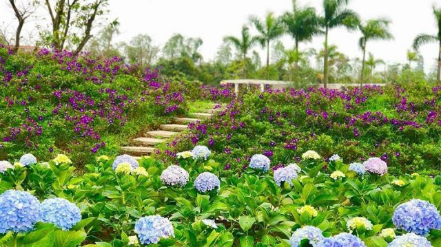 vườn hồng rose part ở Long Biên