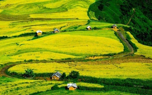 Cánh đồng Chu Lìn (ảnh ST)